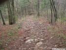 Duncan Ridge Trail -Coosa Bald
