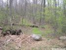 Duncan Ridge Trail - White Oak Stomp