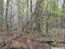 Duncan Ridge Trail - Yellow Birch on Coosa Bald