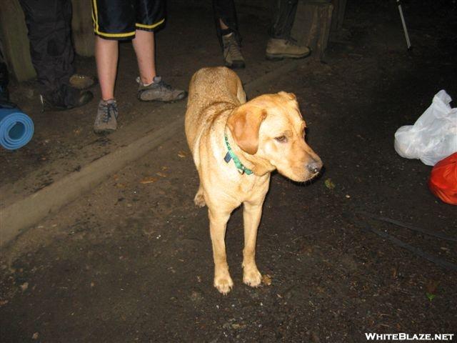 Ezra at Muskrat Creek Shelter