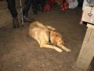 Ezra at Muskrat Creek Shelter 2
