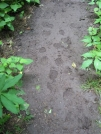 Footprints by buckowens in Section Hikers