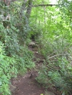 Trail near Albert Mountain by buckowens in Section Hikers