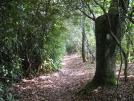 Trail near mooney Gap