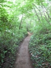 Well cut trail by buckowens in Section Hikers