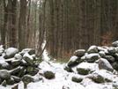 Wood Walk N Of Jug End by Dingus Khan in Views in Massachusetts