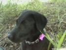 Violet by Minervan12 in Thru - Hikers