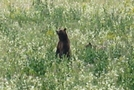 Yellowstone Trip by minish223 in Bears