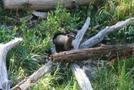 Yellowstone Trip by minish223 in Mice