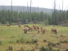 Yellowstone Trip by minish223 in Deer