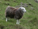 Baaaaaa by Toolshed in Special Points of Interest