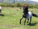 Pony At Grayson Highlands by J5man in Special Points of Interest