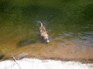~SwimCall~ by RiverWarriorPJ in Trail & Blazes in North Carolina & Tennessee