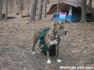 ~Zeus II & His Blankie~ by RiverWarriorPJ in Tent camping