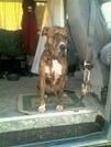 ~Zeus n da Camper~ by RiverWarriorPJ in Virginia & West Virginia Shelters