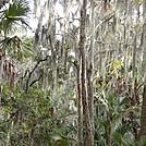 tomoka basin area florida by nitewalker in Other Trails