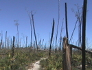 Florida Trail 2008