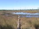 Florida Trail Feb 2008