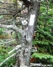 Grey Jay  (Perisoreus canadensis) or trail mooch by quicktoez in Birds