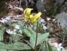Wild flowers in the Smokeys