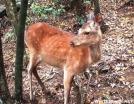 Deer by quicktoez in Deer