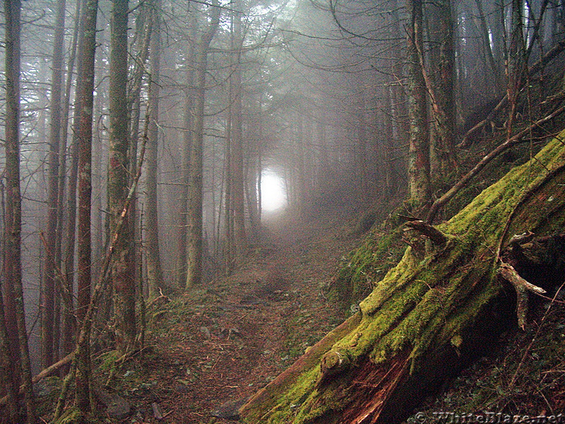 Foggy day in the Smokies