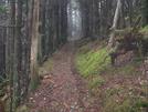Applachian Trail Skakedown Hike..gsmnp  12/2008