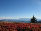 Balds at Roan Highlands by Possum Bill in Views in North Carolina & Tennessee