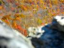 Fall Foliage by Sir Evan in Views in Virginia & West Virginia