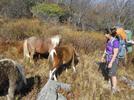 Pony Cluster by Sir Evan in Views in Virginia & West Virginia