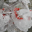Roan Berries by Sir Evan in Views in North Carolina & Tennessee