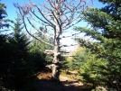 Dead Tree by B Thrash in Section Hikers