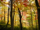 Fall Color Hike 09
