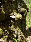 Old friend in the Slickrock Wilderness by coheterojo in Members gallery