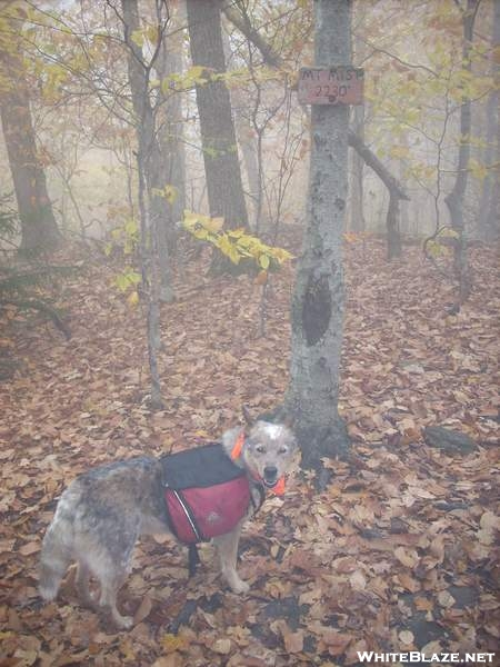 Mt. Mist summit - NH (October 19, 2007)