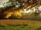 Golden Afternoon North of Glencliff, NH by doggiebag in Views in New Hampshire