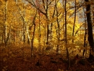 Golden Afternoon 2 North of Glencliff, NH by doggiebag in Views in New Hampshire