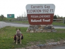 5-25-07 Aldo at Carvers Gap by doggiebag in Views in North Carolina & Tennessee