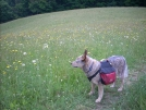 6-1-07 Heading to Damascus - Aldo in a meadow