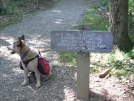 7-15-07 Highest point in the Shenandoahs ... no view though. by doggiebag in Trail & Blazes in Virginia & West Virginia