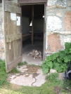 Chesnut knob shelter - Beartown Wilderness by doggiebag in Virginia & West Virginia Shelters