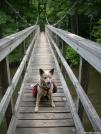 Team Doggiebag's Aldo on Kimberling Creek suspension Bridge by doggiebag in Trail & Blazes in Virginia & West Virginia