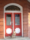 """Team Doggiebag's """"Aldo"""" waiting for the bar to open up. by doggiebag in Maryland & Pennsylvania Trail Towns"""