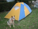 11-29-07 My new 4 season convertible. by doggiebag in Tent camping