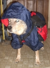 12-15-07 Ready for the Adirondacks