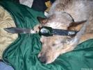 "Team Doggiebag's ""Aldo"" has his BFK ready."