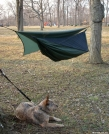 Practice setup complete. by doggiebag in Hammock camping