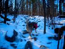 1/20/08 - Winter Trail Scene Rollercoaster by doggiebag in Trail & Blazes in Virginia & West Virginia
