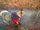 4/23/08 Heading To Harpers Ferry by doggiebag in Trail & Blazes in Virginia & West Virginia