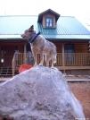 Hiker Hostel rock by doggiebag in Hostels